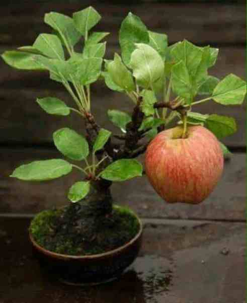 keep away bonsai to stay positive, rich, happy & healthy