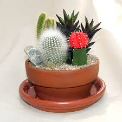 keep away Cactus to stay positive, rich, happy & healthy