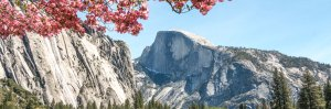 Half Dome & Pink Dogwood Blossoms