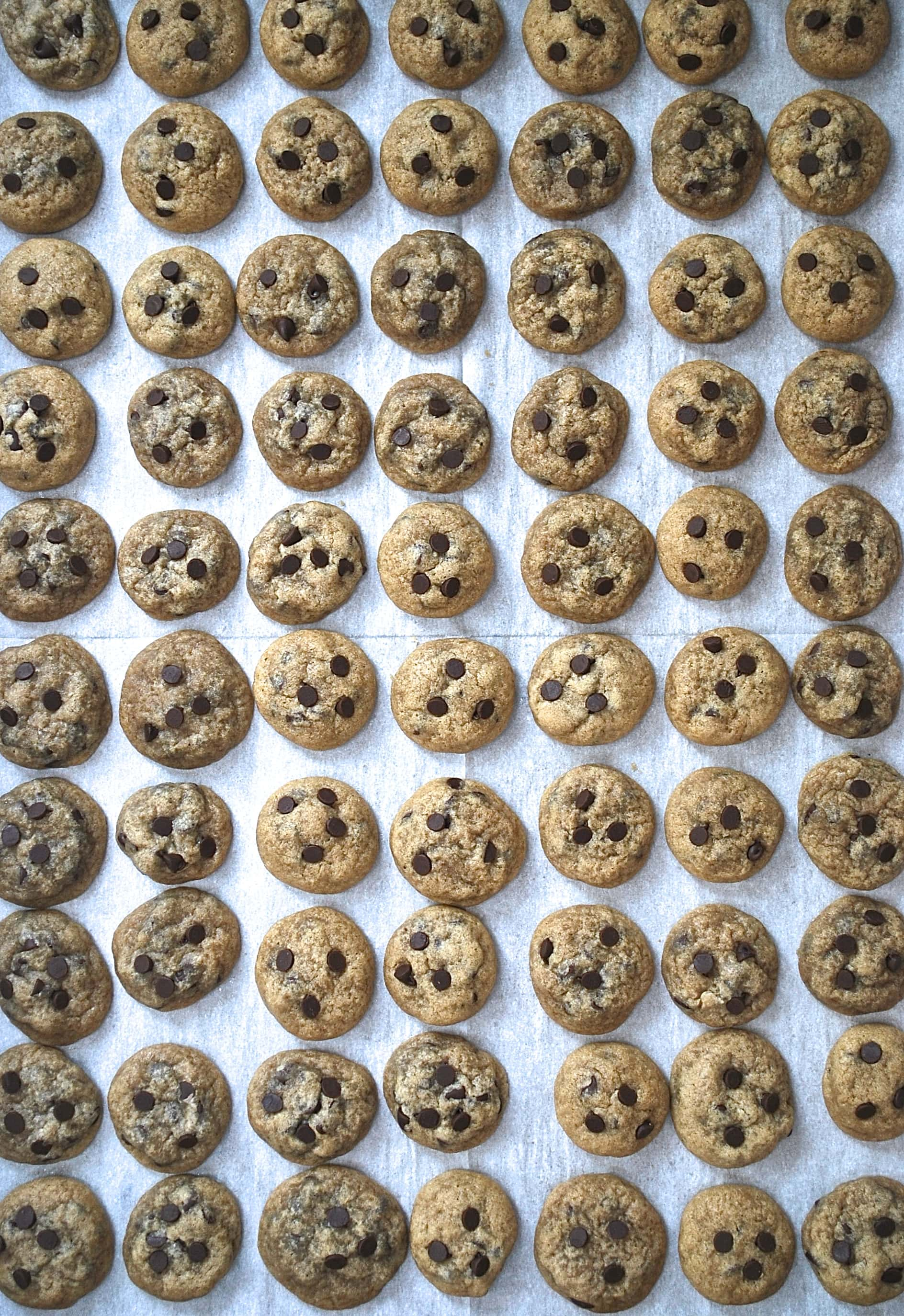 Mini Chocolate Chip Cookies | life is but a dish