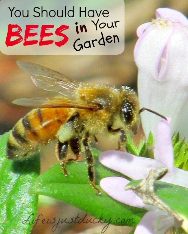 How Important Are Bees In Your Garden? - Life Is Just Ducky