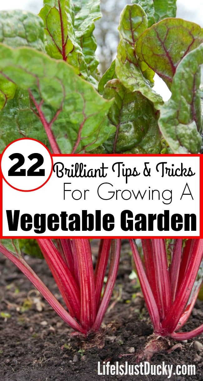 22 Brilliant Vegetable Gardening Tips For Beginners Life Is Just Ducky
