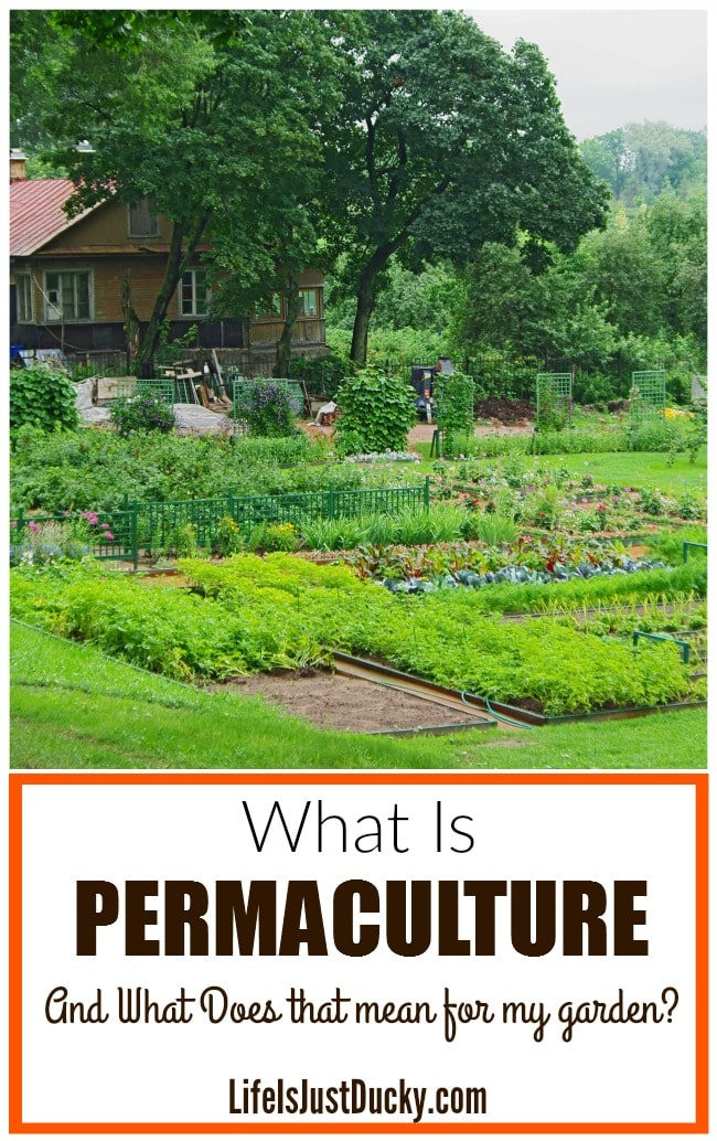 What is permaculture and how does it apply to me life is just ducky what is permaculture and is it right for your garden whether you hve a homestead solutioingenieria Image collections