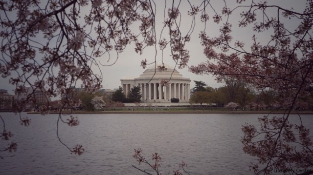 Spring, Don't Leave Me! - Washington D.C.