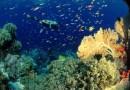 Thailandia, il lockdown salva i coralli e la fauna marina
