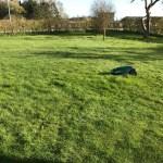 Robomow klipper græs