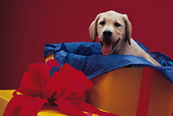 household_hazards_-_holiday_safety_tips_for_dog_owners-1_2009