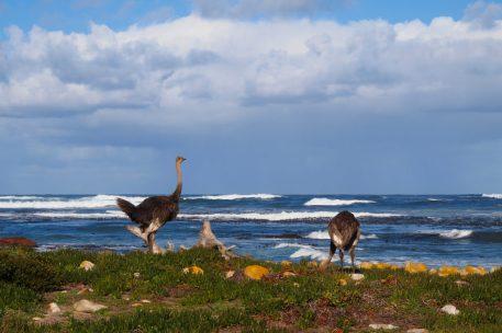 Kaaps schiereiland