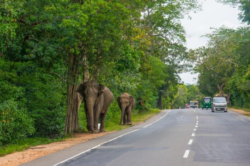 Sri Lanka (10)