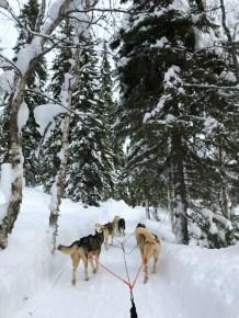 Lapland, husky safari