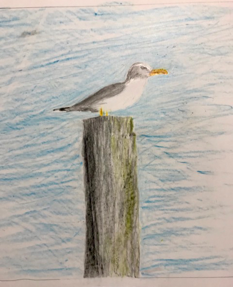 Seagull (colored pencil), NFS