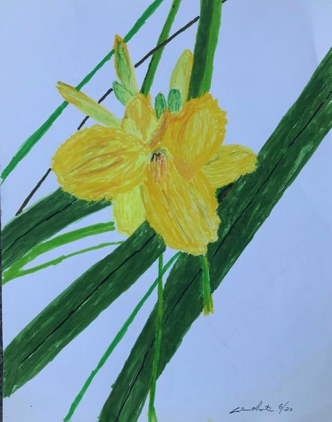 Lily (brush pen), NFS