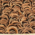 Cork Flooring: A modern floor choice