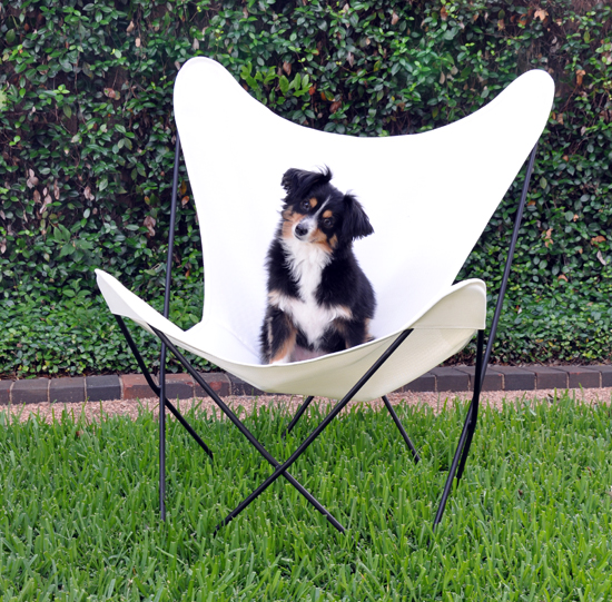 Butterfly Chair and Ritzy
