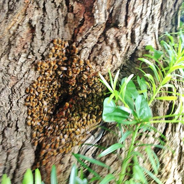 Bob Borson's Bee Hole