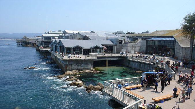 Monterey Bay Aquarium. Photo by: Meij Kobayashi
