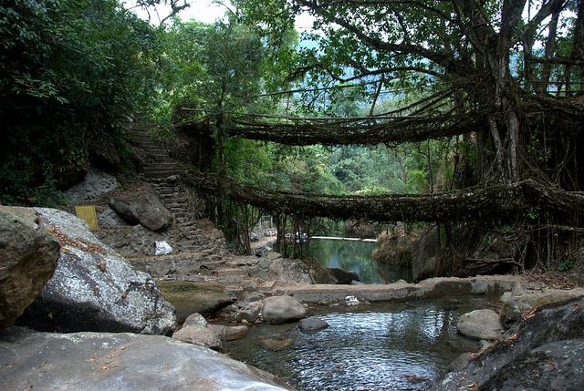 Living Root Bridges of Meghalaya