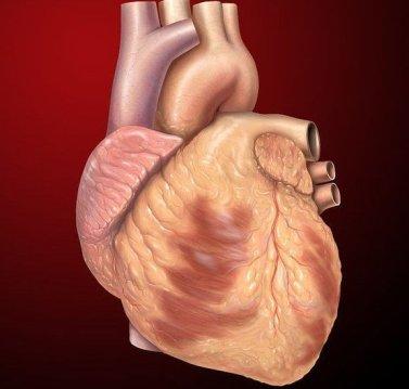 Why is Hypertension so Dangerous