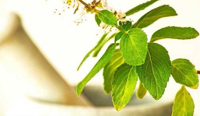 ayurvedic herbs for diabetes