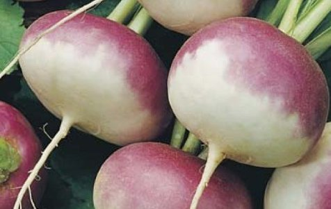 Are Turnips Good For You