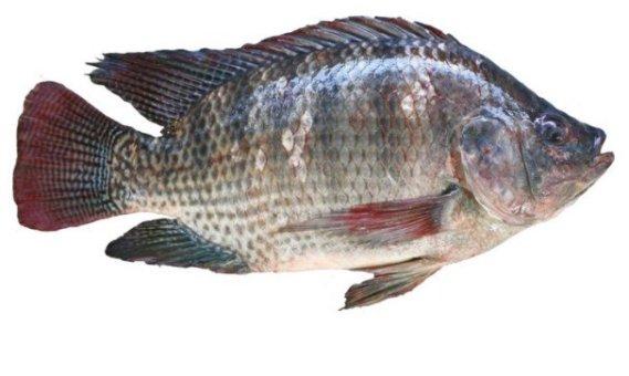 Healthiest Fish To Eat