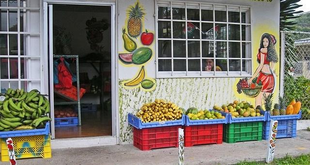 fruit shot in panama