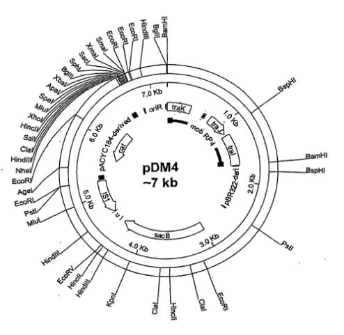 pDM4 Plasmid pDM4,Plasmid pDM4,pDM4 vector