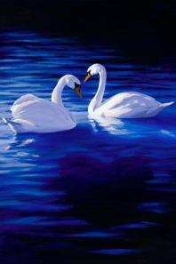 belvaspata-swans-healing-body-angelic