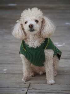 AD body_toy poodle