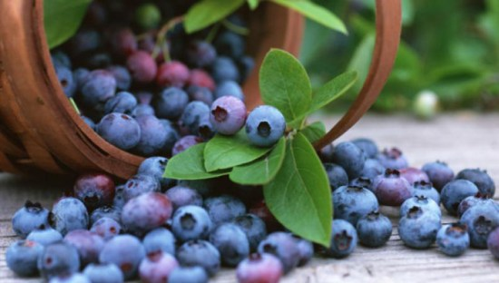 Blueberries - Lifestan