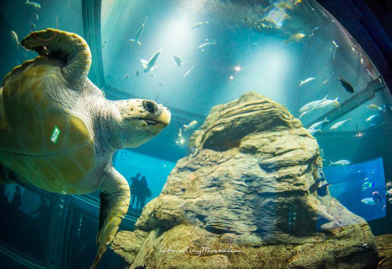 Osaka-Aquarium32