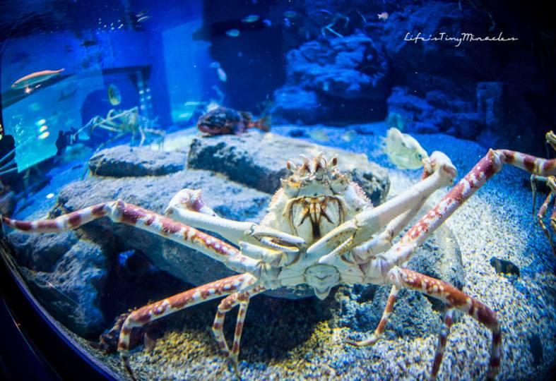 Osaka-Aquarium36