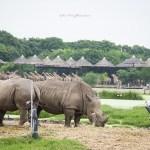 Bangkok Safari World – A Drive on the Wild Side!