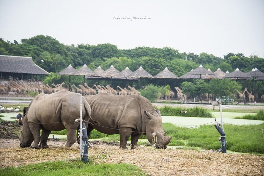 bkk-safari07