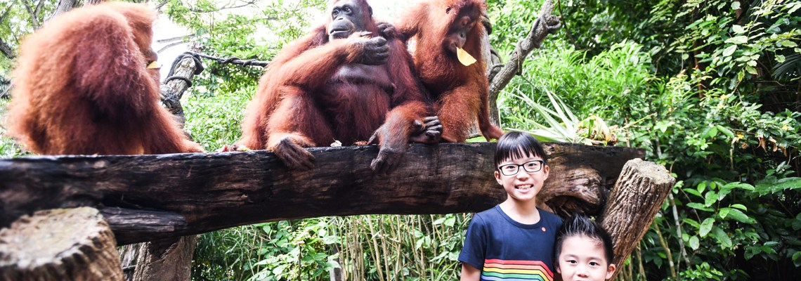 2 new ways to enjoy the Singapore Zoo!