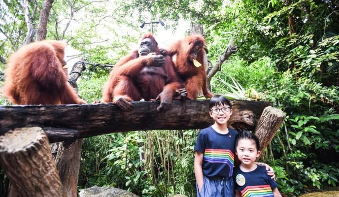 2 new ways to enjoy the Singapore Zoo!