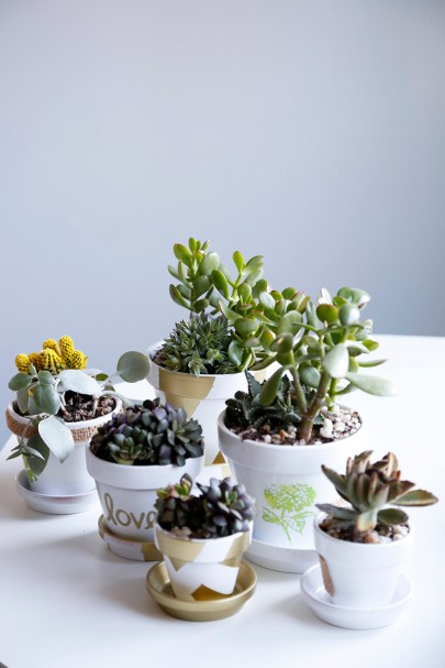 Mother's Day Potted Plant Gift Idea