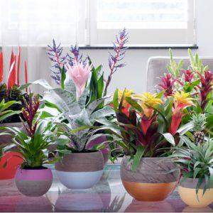 Een bananenplant in huis is super gezond  Lifestyle NWS