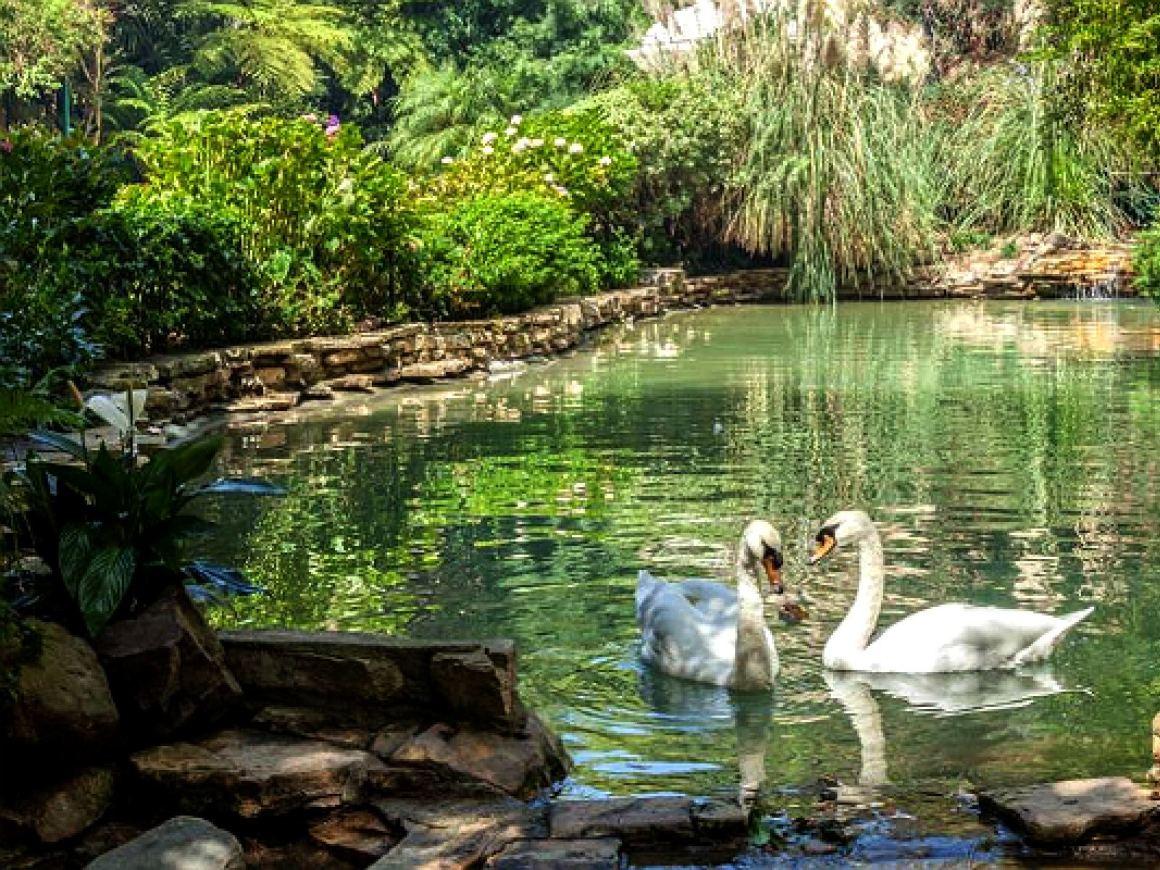 hotel-bel-air-swans.jpg