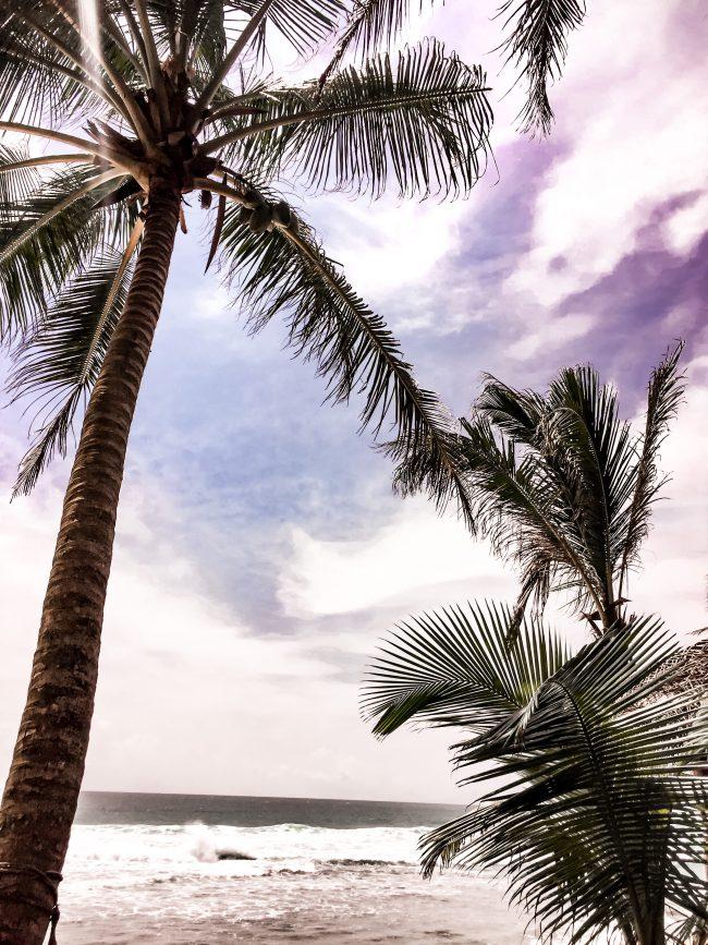 Sri Lanka Palms Lifestylecircus