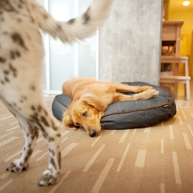 P.L.A.Y. Pet Lifestyle and You Round Bed Denim + Brown_2