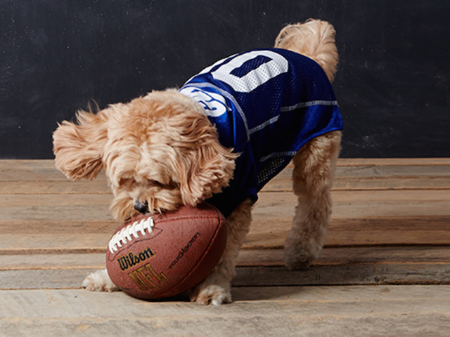 Mirage Pet Products New York Giants Pet Jersey
