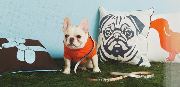 The Pet Shop: Beds, Leashes, & Decor at Rue La La