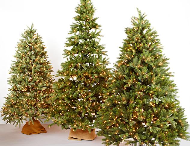 Christmas Trees feat. Santa's Own at MYHABIT