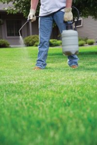 pesticides on lawn