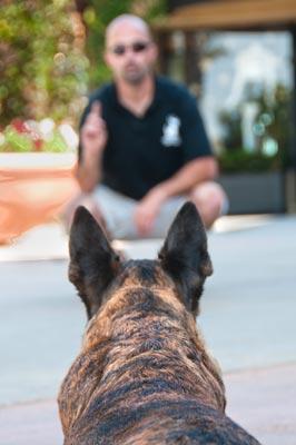 dog training techniques