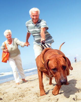 mature adults seniors walking dog on beach