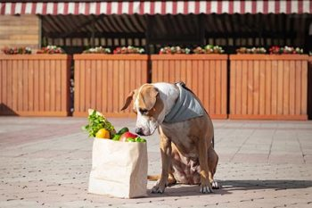 going to the farmers market with dog