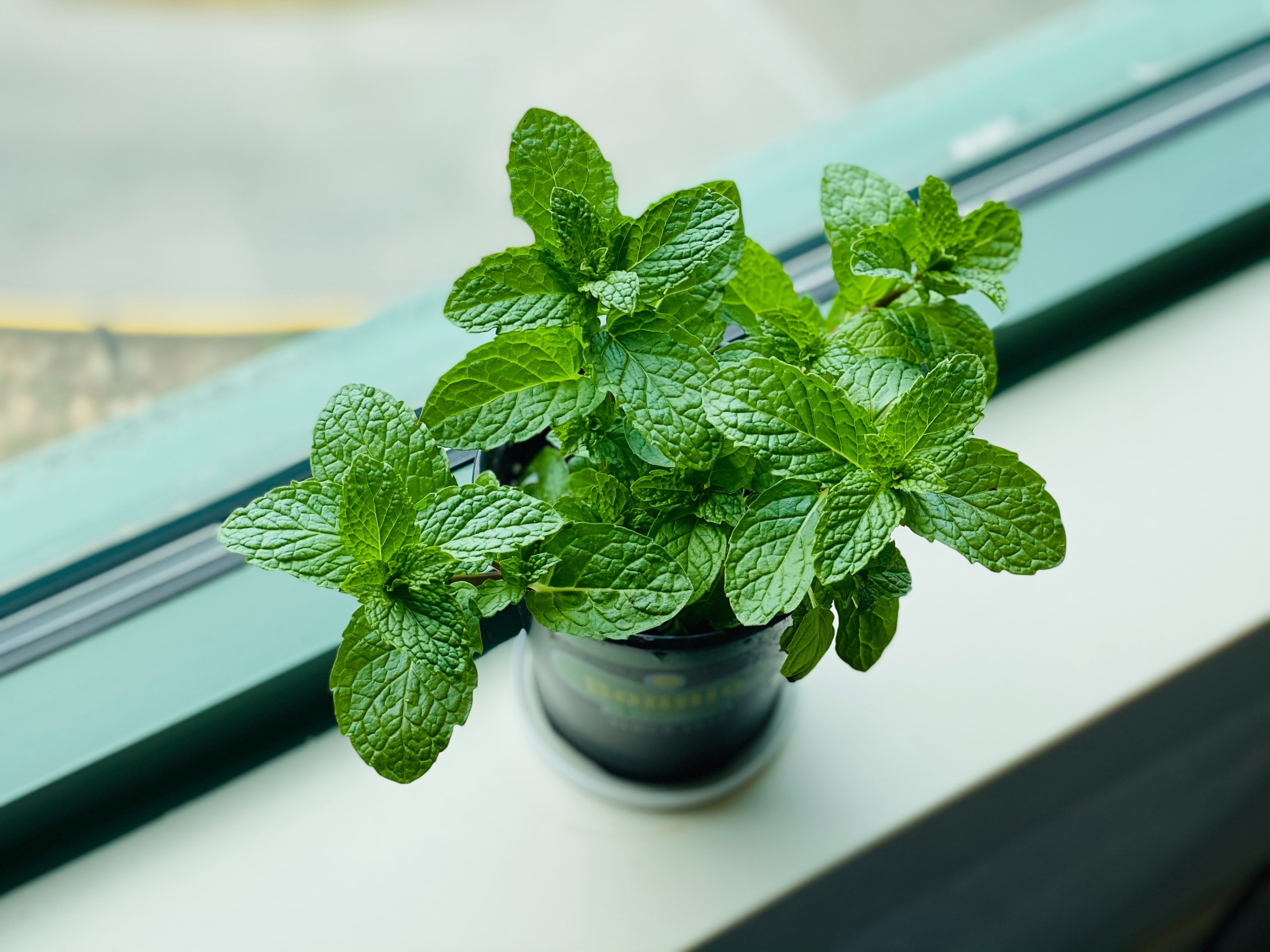 Essential Herbs to grow in your kitchen garden easily