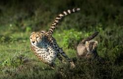 Animal locomotion slow-motion video's